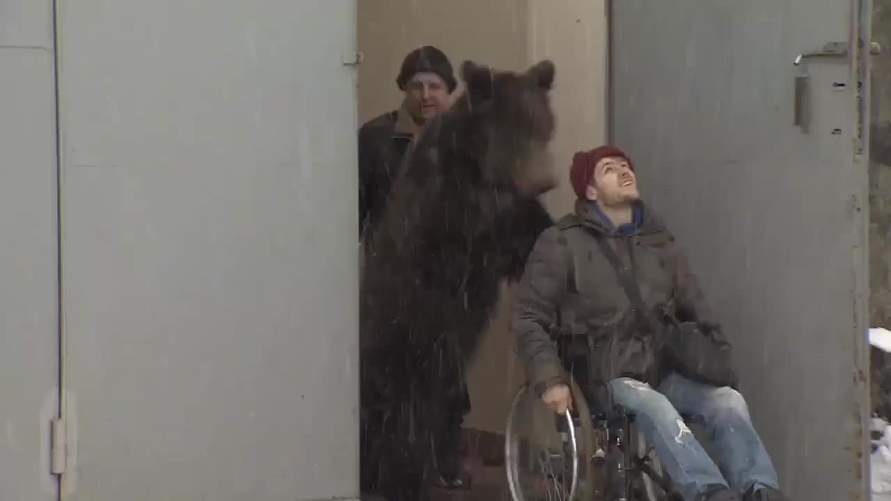 Bear pushes his injured trainer around in wheelchair after he breaks both legs in horrific 60ft fall