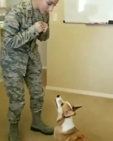Corgi and her owner having fun