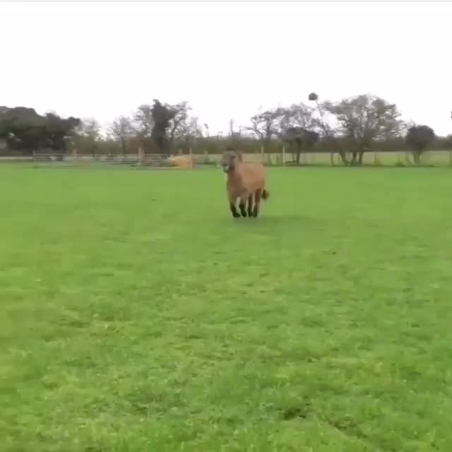 AnimalsBeingDerps