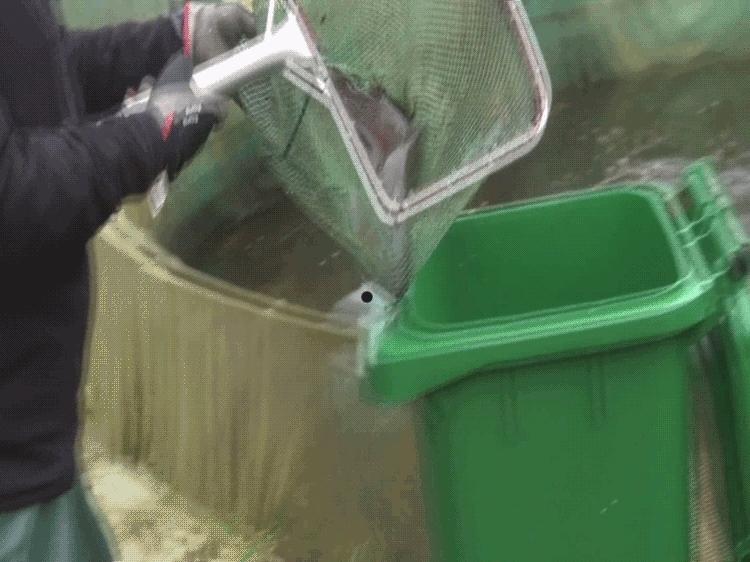En soptunna utan vatten med en levande fisk på botten