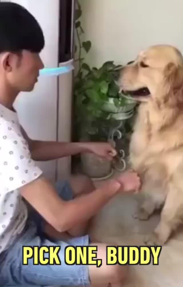 dog, funny, puppy, Dog Fails GIFs