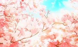 Watch Cherry blossoms [] GIF on Gfycat. Discover more Shigatsu wa kimi no uso, arima kousei, blondie hihi, cherry blossom, cherry blossom tree, edits, miyazono kaori, ore no, sakura, scenery, spring GIFs on Gfycat