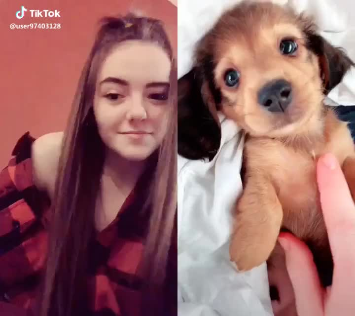 duet, foryou, foryoupage, omg,  #duet with @bear_poo OMG THIS DOG AHHH #foryou #foryoupage #omg #aww I'm dying of cuteness 😩😍 GIFs
