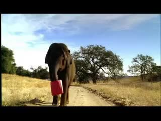 commercial, elephant, mastercard, priceless, elephant GIFs