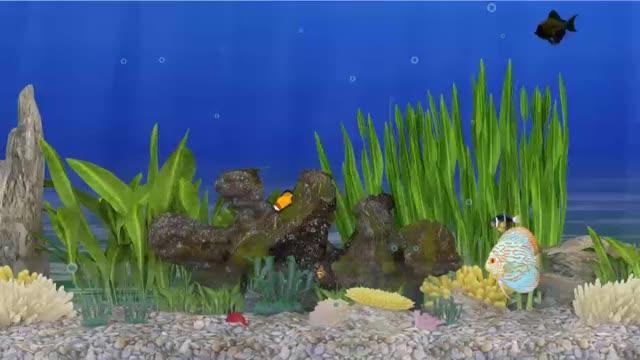 Watch and share VDO 3D Animation (ตู้ปลา2) GIFs by baifern28 on Gfycat
