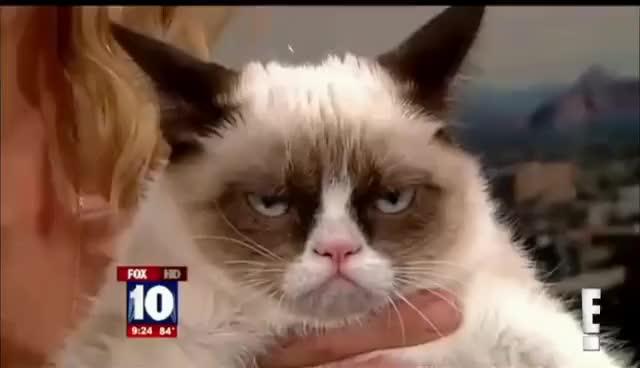 Watch grumpy cat GIF on Gfycat. Discover more Grumpy cay GIFs on Gfycat