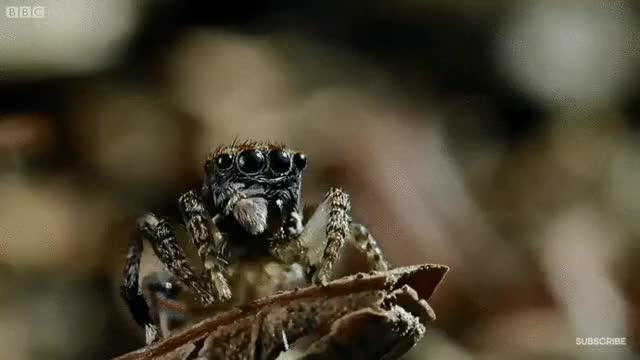 Watch and share Spider GIFs on Gfycat