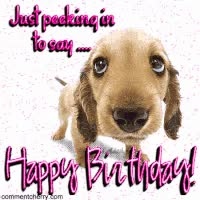 Watch and share Happy Birthday Dog GIFs on Gfycat