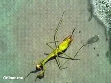Watch and share This Kills The Mantis Some Sort Of Parasite Three Times GIFs on Gfycat
