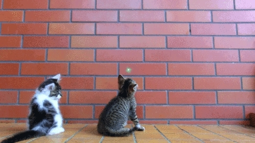 male cats spraying after neutering