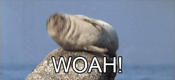 gfycatdepot, Whoa! I almost gave a fuck [Nature sea lion seal hiccup startle surprised don't care.] 1 MIC (reddit) GIFs