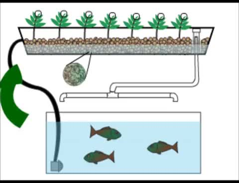 Watch Home Aquaponics- Quick Animation GIF on Gfycat. Discover more related GIFs on Gfycat