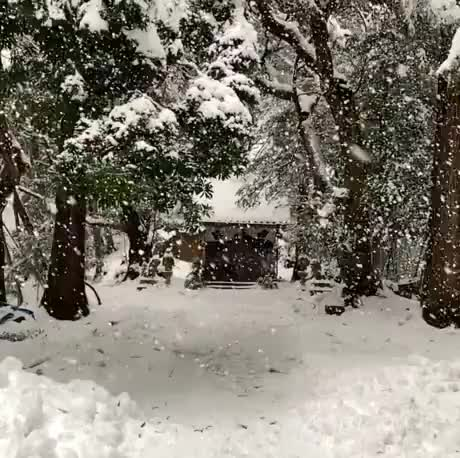 Watch and share Winter Snow In Kyoto GIFs by Gif-vif.com on Gfycat