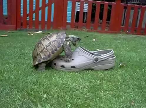 animals, sex, sexy turtle, tortoise, turtle, Turtle C: GIFs