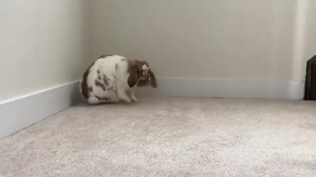 Watch and share Furbabylove GIFs and Bunnylover GIFs on Gfycat