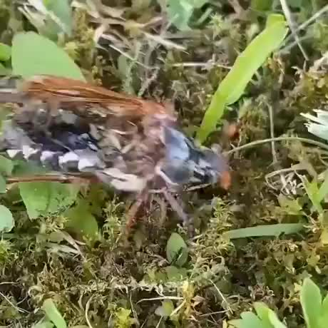 Watch and share Zombie Insect... GIFs by Gif-vif.com on Gfycat