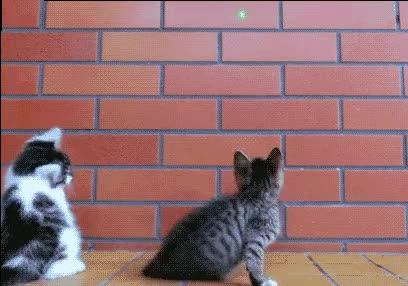 Watch and share Sniper GIFs and Cute GIFs by blurkness on Gfycat
