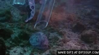 Watch and share Suck The Fish GIFs on Gfycat