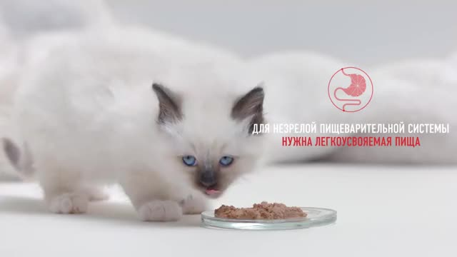 Watch and share Royal Canin GIFs and Los Gatos GIFs by Ice Cream Goya 55009 on Gfycat