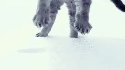 Watch and share Large Cat Falling Through The Snow. :3 : Gifs GIFs on Gfycat