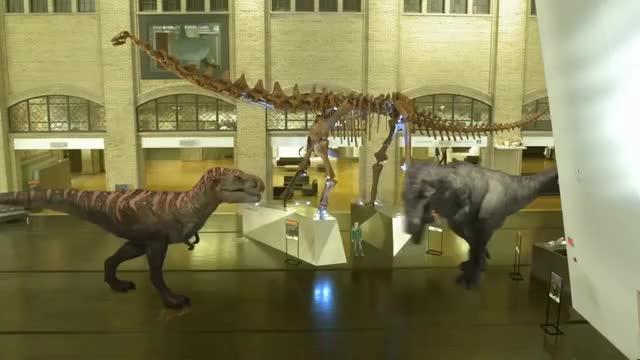 Watch and share Coelurosaur GIFs and Carnosaur GIFs on Gfycat