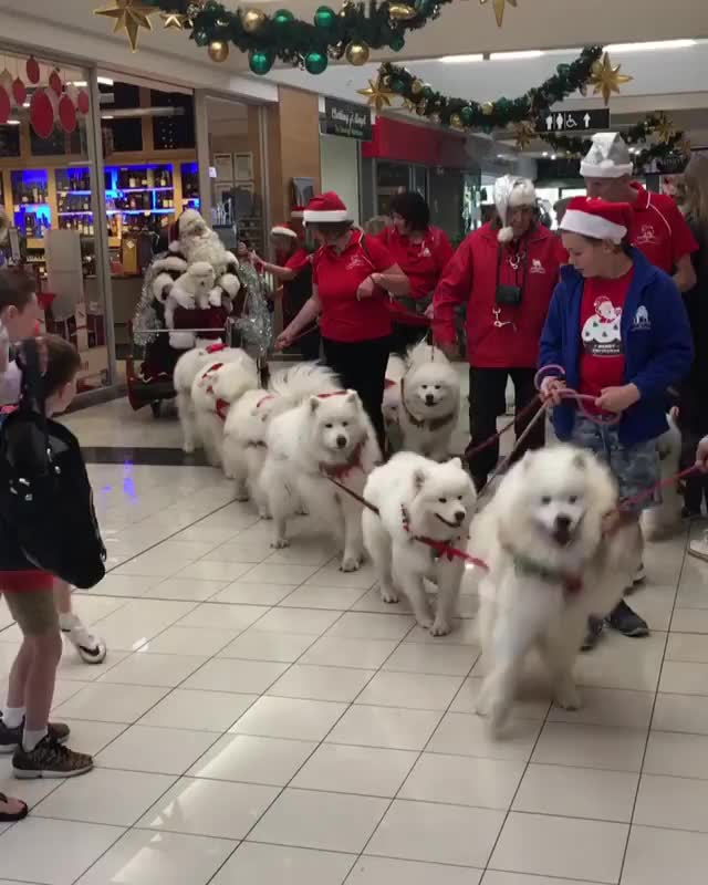 Watch and share Rarepuppers GIFs on Gfycat