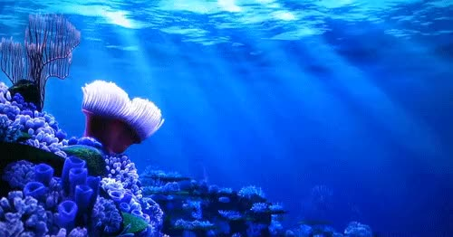 Watch and share Sea Anemone : Eyebleach GIFs on Gfycat