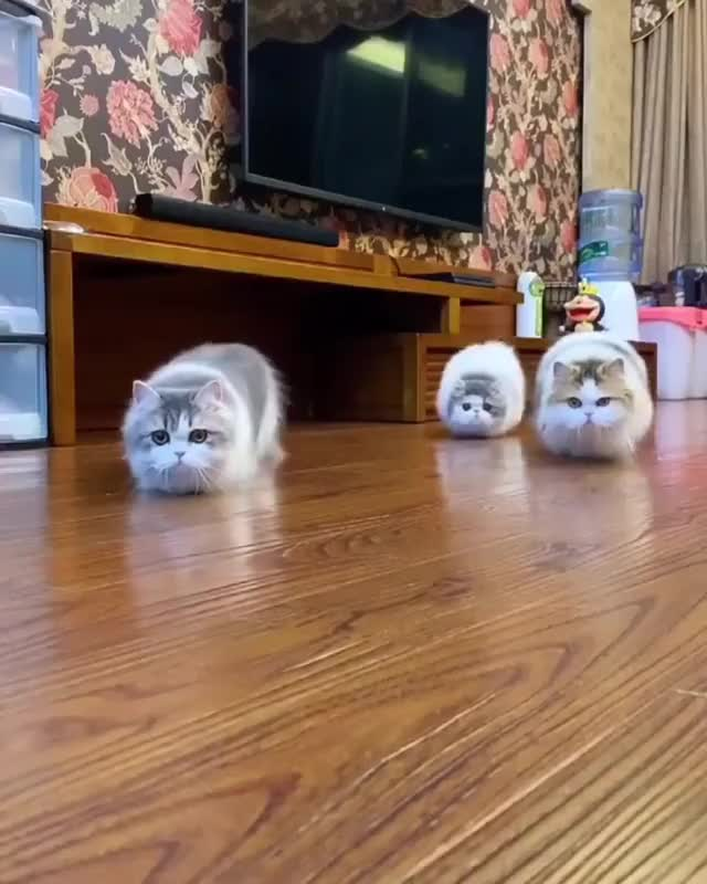 Watch and share Synchronized Stalking Cats GIFs by Boojibs on Gfycat
