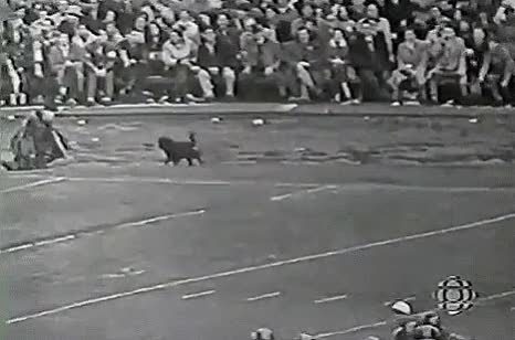 Watch and share Empire Stadium GIFs and Pigskin Pete GIFs by Archley on Gfycat
