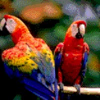 Watch and share Parrot GIFs on Gfycat