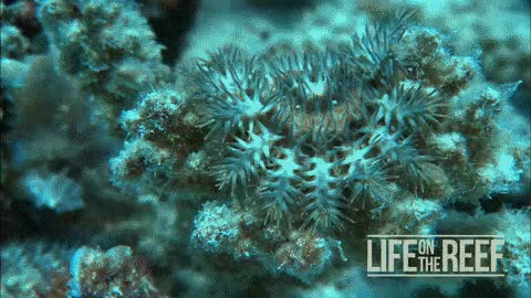 Watch and share Great Barrier Reef GIFs and Environment GIFs on Gfycat
