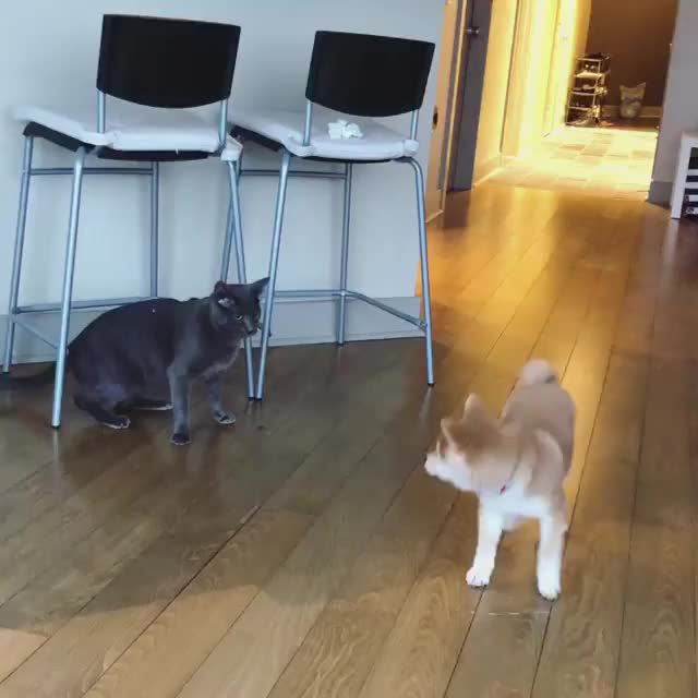 Watch and share Shibeslap2 GIFs by cakejerry on Gfycat