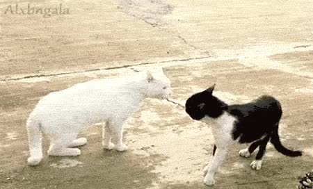 Watch and share Animals Who Have The Come At Me Bro Nailed GIFs on Gfycat