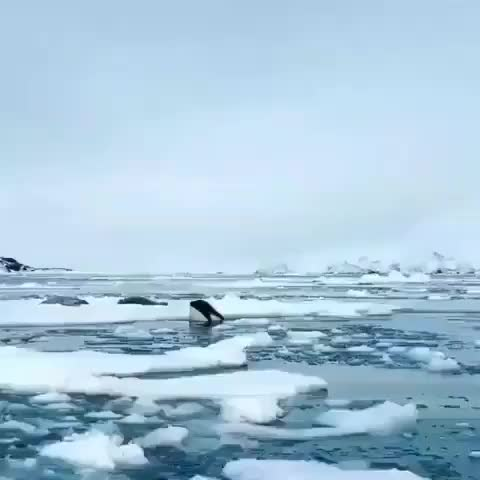 Watch and share Nature GIFs by PrviAxiom on Gfycat