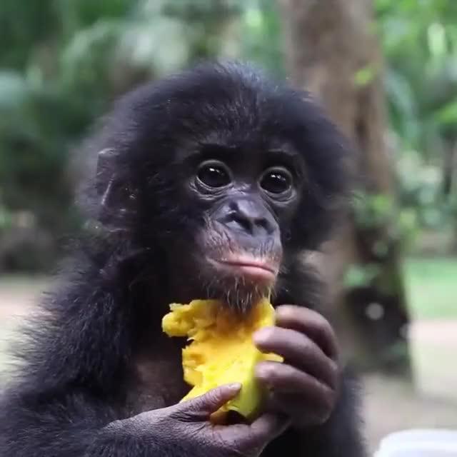Watch and share Lola Ya Bonobo GIFs and Sanctuary GIFs by b12ftw on Gfycat