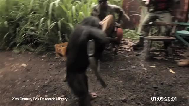 Watch Ape With AK-47 GIF on Gfycat. Discover more ak-47, chimp, monkey shoots gun GIFs on Gfycat