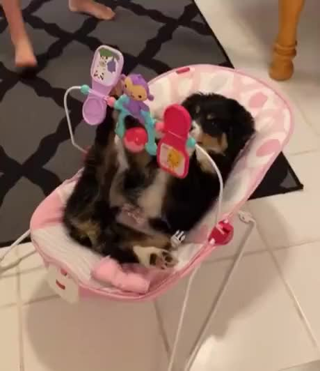 Watch and share What Happened To The Baby GIFs by Gif-vif.com on Gfycat
