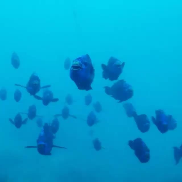 MarineBiologyGifs, marinebiologygifs, Video by marco_in_la GIFs