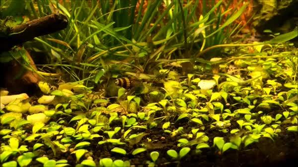 plantedtank, I have significantly more pets than you GIFs