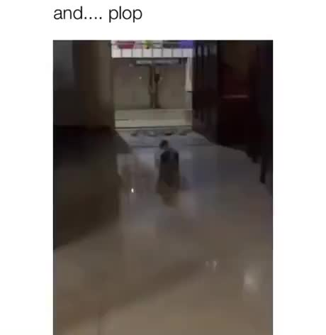 Watch and share And Plop GIFs by Gif-vif.com on Gfycat