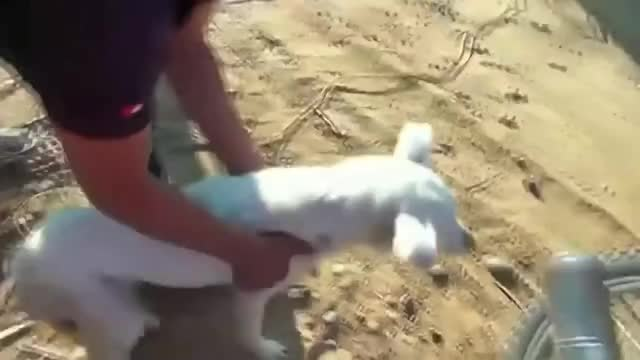 Watch After recent floods, Peruvian authorities ordered to install dogs in drains alive to help drinking the rainwater GIF on Gfycat. Discover more cute, dog, peru GIFs on Gfycat
