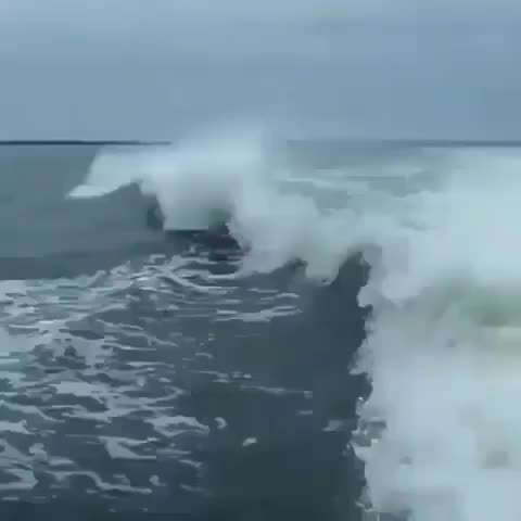 Watch and share Dolphins Aren't Always Majestic GIFs by jivaii on Gfycat