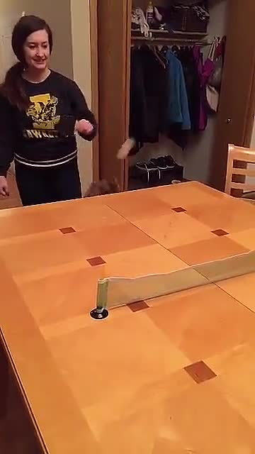 Watch and share Ping Pong Is Fun GIFs by PracticalProperty on Gfycat