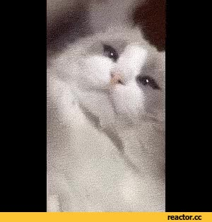 Watch wizard GIF on Gfycat. Discover more related GIFs on Gfycat