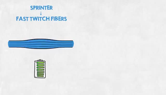Watch and share Easy Illustration Of Muscle Fibre Types GIFs on Gfycat