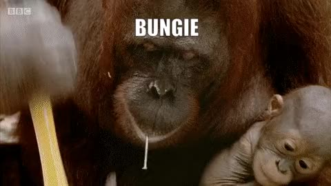 Watch and share Bungo Plz GIFs by R K  on Gfycat
