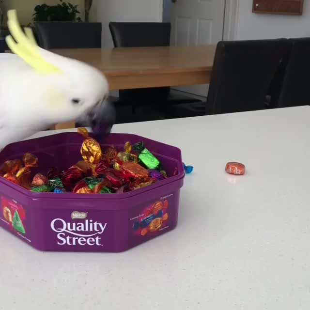 Watch and share Quality Street Quality Control GIFs on Gfycat