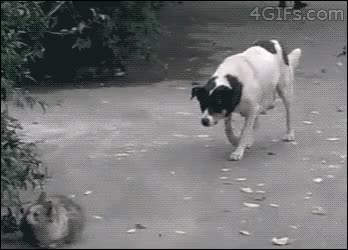 Watch Sneaky-Dog-Behind-Crazy-Cat GIF by GlobalSweet (@superkozz) on Gfycat. Discover more instantregret GIFs on Gfycat