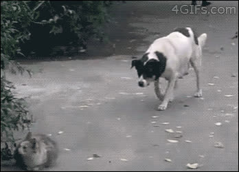 instantregret, Sneaky-Dog-Behind-Crazy-Cat GIFs