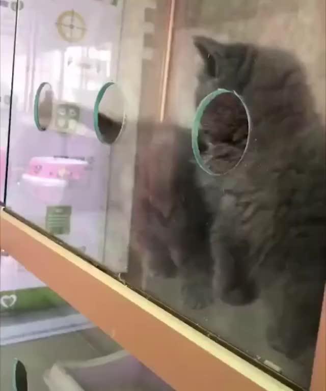 Watch and share Fluid Kitten GIFs on Gfycat